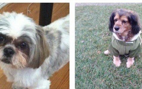 Vote Now! Cutest Pet Contest Is Back!