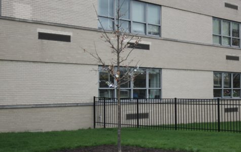 Niles West Plants Tree In Honor of Mr. Paul Wack