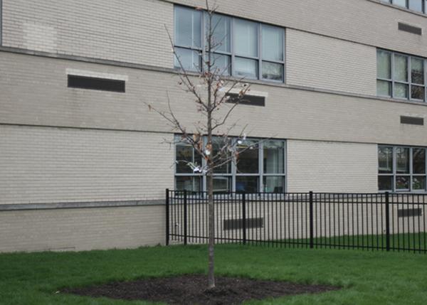 Niles West Plants Tree In Honor of Mr. Paul Wack