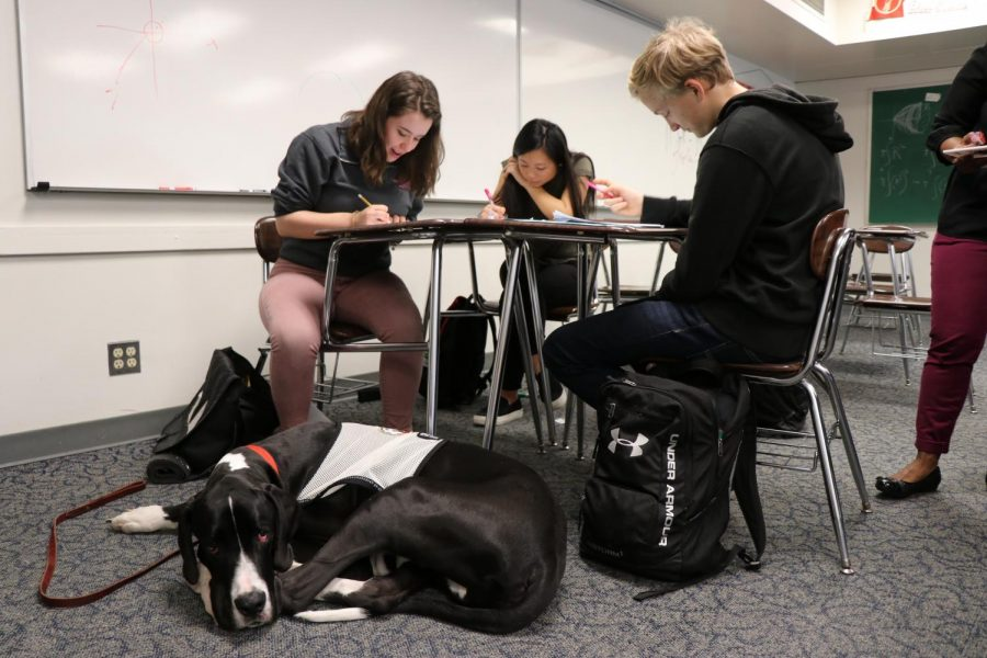 Service dog Chief takes nap next to owner and best friend Molly Schoenbeck during her math class.