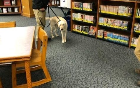 Bed bug–sniffing dogs inspected the library after the first sighting.