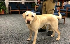 """No """"Paws"""" for Concern: Bed Bug–Sniffing Dog Gives the All-Clear"""