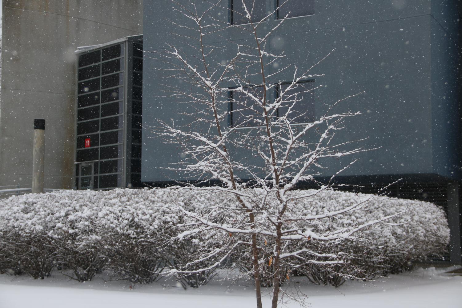Tree+sprinkled+with+snow+near+the+science+wing.+